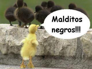Imágenes loleantes v2.0. Racismopollo